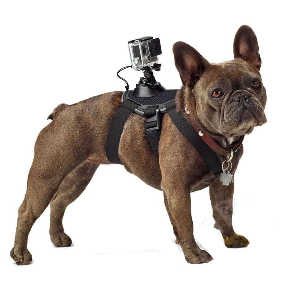 accessoire chien