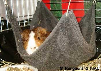 accessoire pour cochon d inde