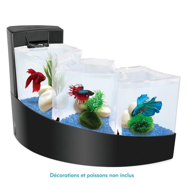 aquarium complet