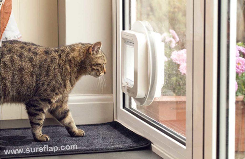 chatiere vitre
