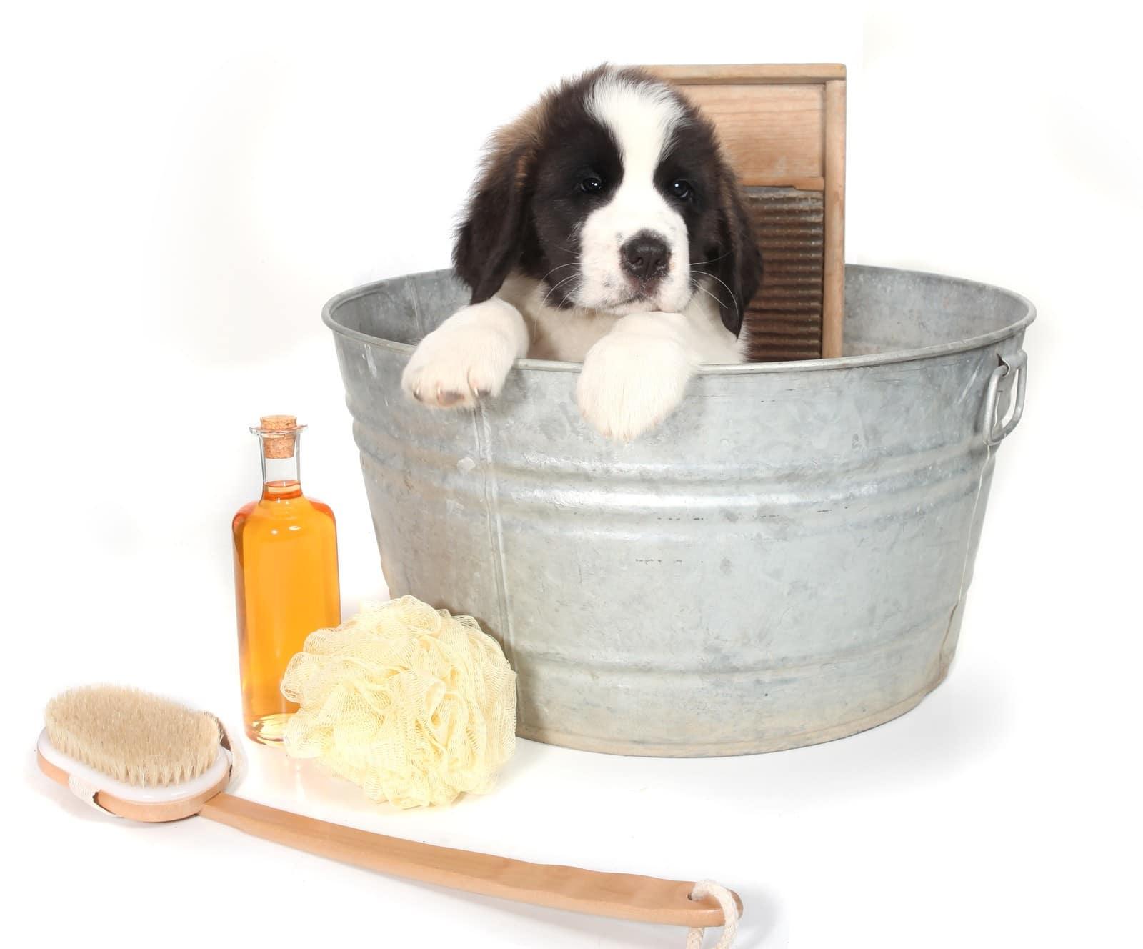 chien toilettage