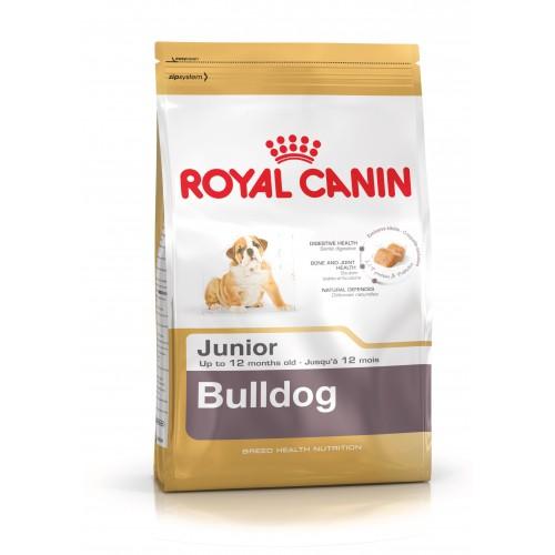 croquette bulldog anglais