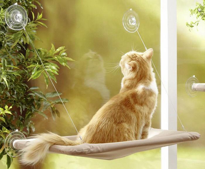 hamac fenetre chat