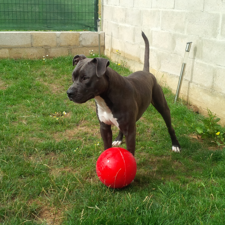 jouet pour chien indestructible