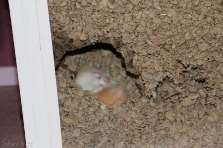 litiere hamster